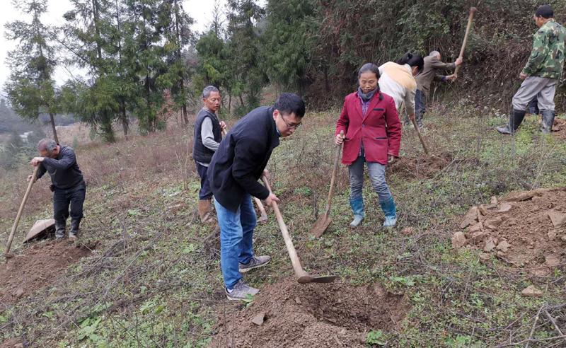 陈才带领群众积极开展国家储备林项目建设.jpg